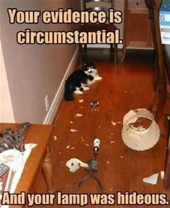 circumstantial evidence and cat